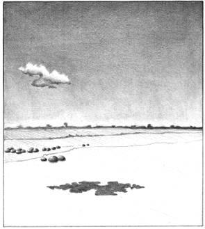 41Under The Pepper Trees - illustration